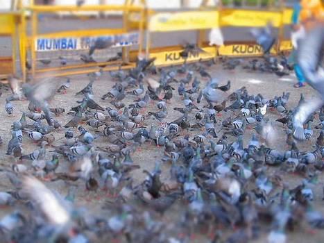Pigeon by Adil