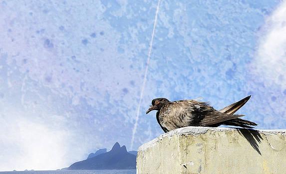 Pigeon of Ipanema by Jose Francisco Abreu