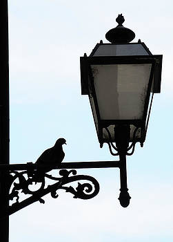 Pigeon on a Lamppost by Sharon Sefton