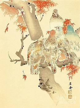 REPRODUCTION - Pigeons and Maple