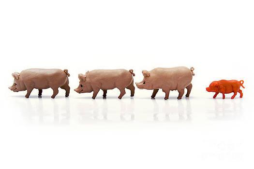 BERNARD JAUBERT - Pigs figurines