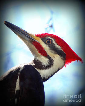 Pileated Close Up by Crystal Joy Photography