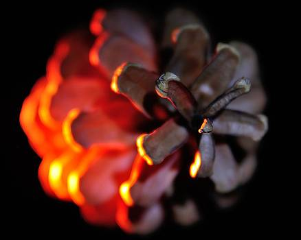 Pine Cone FIre by Todd Soderstrom