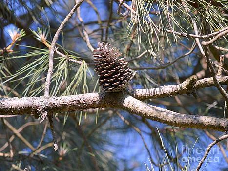 Bishopston Fine Art - Pine Cone
