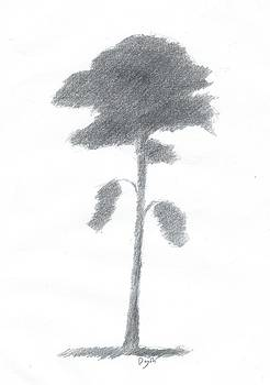 Pine Tree Drawing Number Five by Alan Daysh