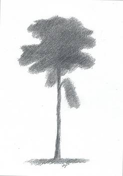 Pine Tree Drawing Number Three by Alan Daysh