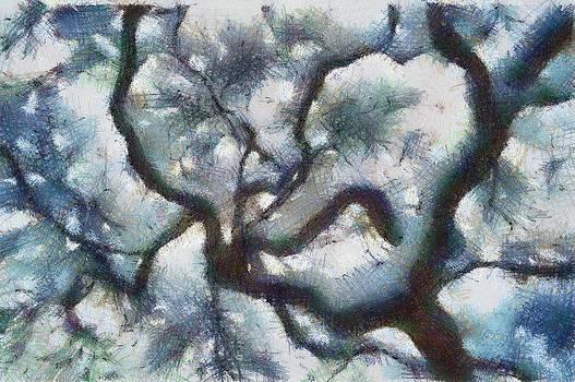 Pine Tree by Natalia Corres