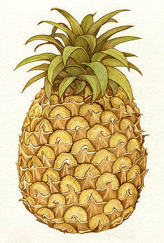 Pineapple by Cate McCauley