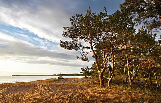 Pines on the baech by Anna Grigorjeva