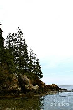 Pines On The Point by Belinda Dodd