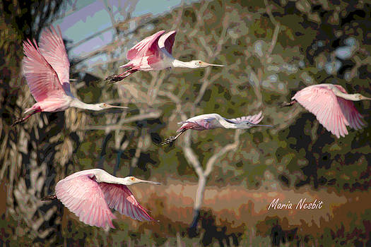 Pink and Feathers by Maria Nesbit