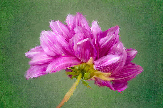 Pink and Green by Larry  Goss