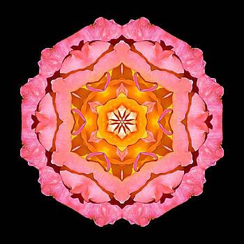 Pink and Orange Rose I Flower Mandala by David J Bookbinder