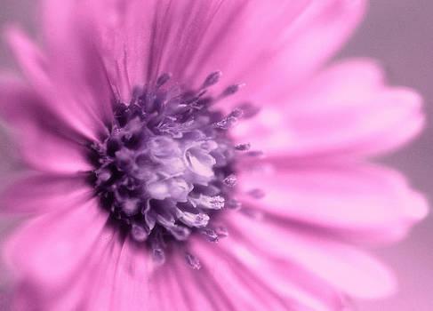 Pink and Purple by Heather Bridenstine