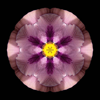 Pink and Purple Pansy Flower Mandala by David J Bookbinder