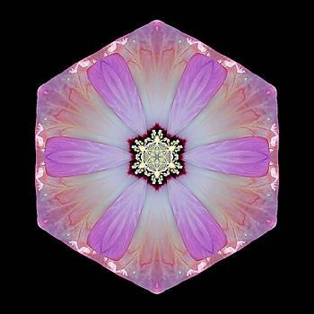 Pink and White Hibiscus Moscheutos I Flower Mandala by David J Bookbinder