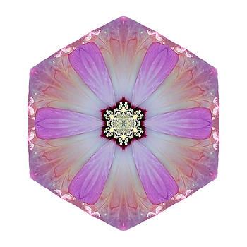 Pink and White Hibiscus Moscheutos I Flower Mandala White by David J Bookbinder