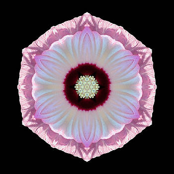 Pink and White Hibiscus Moscheutos VII Flower Mandala by David J Bookbinder
