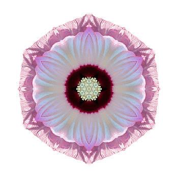 Pink and White Hibiscus Moscheutos VII Flower Mandala White by David J Bookbinder