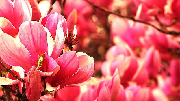 Pink by Benjamin Prater