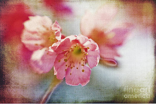 Scott Pellegrin - Pink Blossom