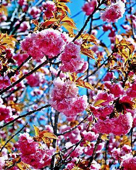 Jeff McJunkin - Pink Blossoms