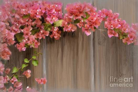 Pink Bougainvillea by Andrea Auletta