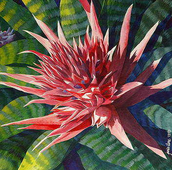 Pink Bromeliad - Closeup by Janis Grau