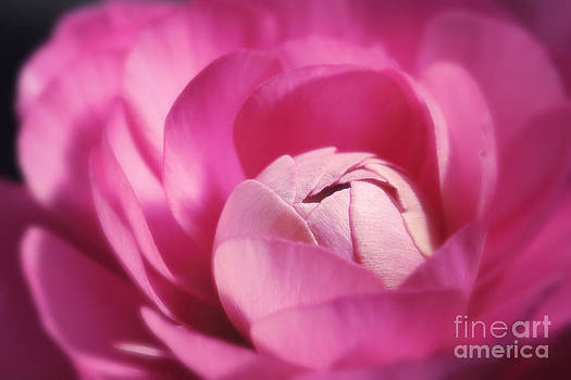 LHJB Photography - Pink Buttercup