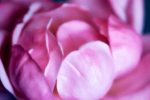Pink Chiffon by Joan Bertucci
