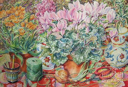 Pink Cyclamen by Barbara Timberman