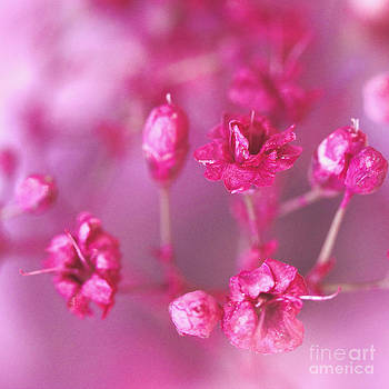 Pink Dreams by Karin Ubeleis-Jones