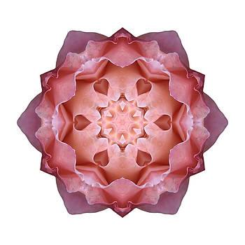 Pink Fall Rose I Flower Mandala White by David J Bookbinder