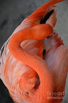 Pink Flamingo by Robert Meanor