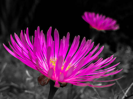 Pink flower in a green grass - splash by Fabio Giannini
