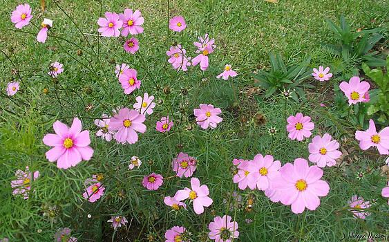 Pink Flowers by J Morgan Massey