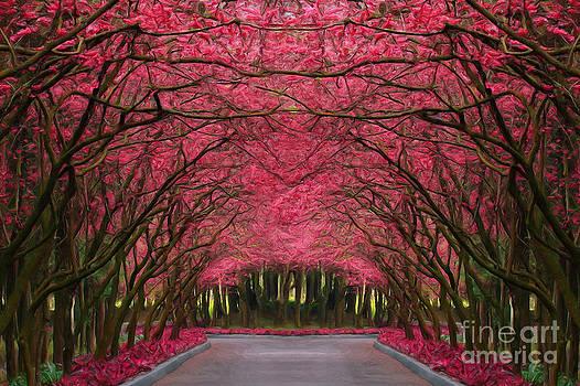 Pink Forest Way by Martin Dzurjanik