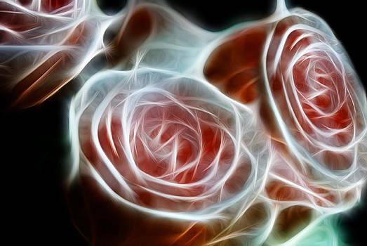 Cindy Boyd - Pink Glowing Roses