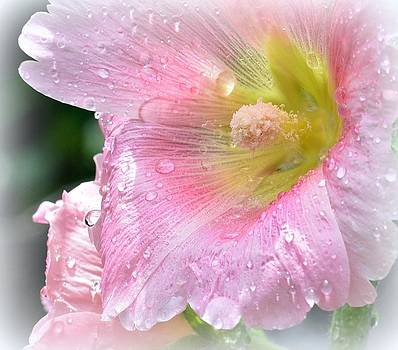 Pink Hibiscus by Kerry Hauser