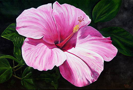 Pink Hibiscus by Lyndsey Hatchwell