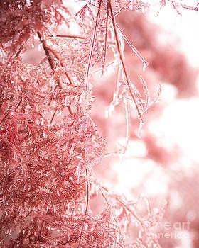 Sonja Quintero - Pink Ice