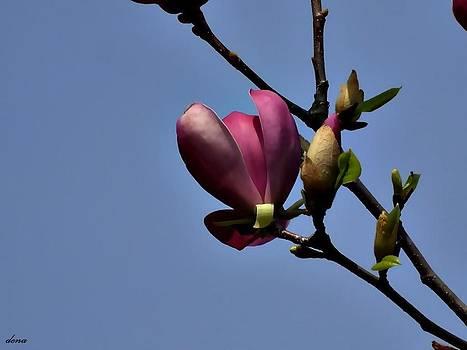 Pink in Blue by Daniela Nedelea