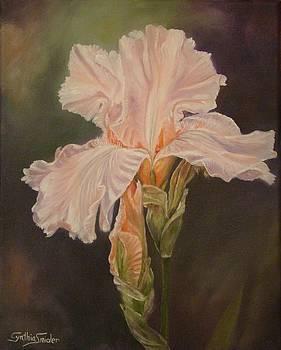 Pink iris by Cynthia Snider