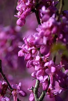 Pink by Judy Salcedo