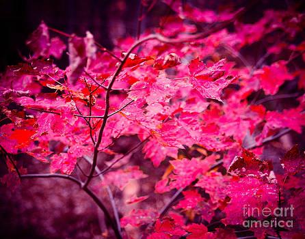 Sonja Quintero - Pink Leaves