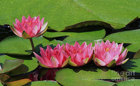 Pink Lotus Flowers by Roger Becker