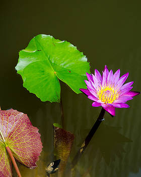 Pink lotus with its green leaf by Jirawat Cheepsumol
