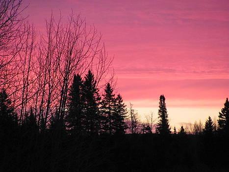 Pink Morning by Sandra Martin