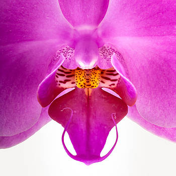 onyonet  photo studios - Pink Orchid Lip