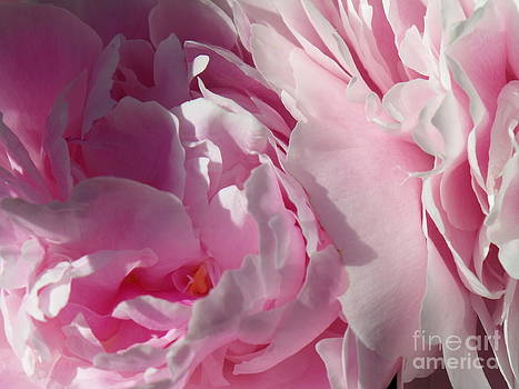 Pink Peonies by HEVi FineArt